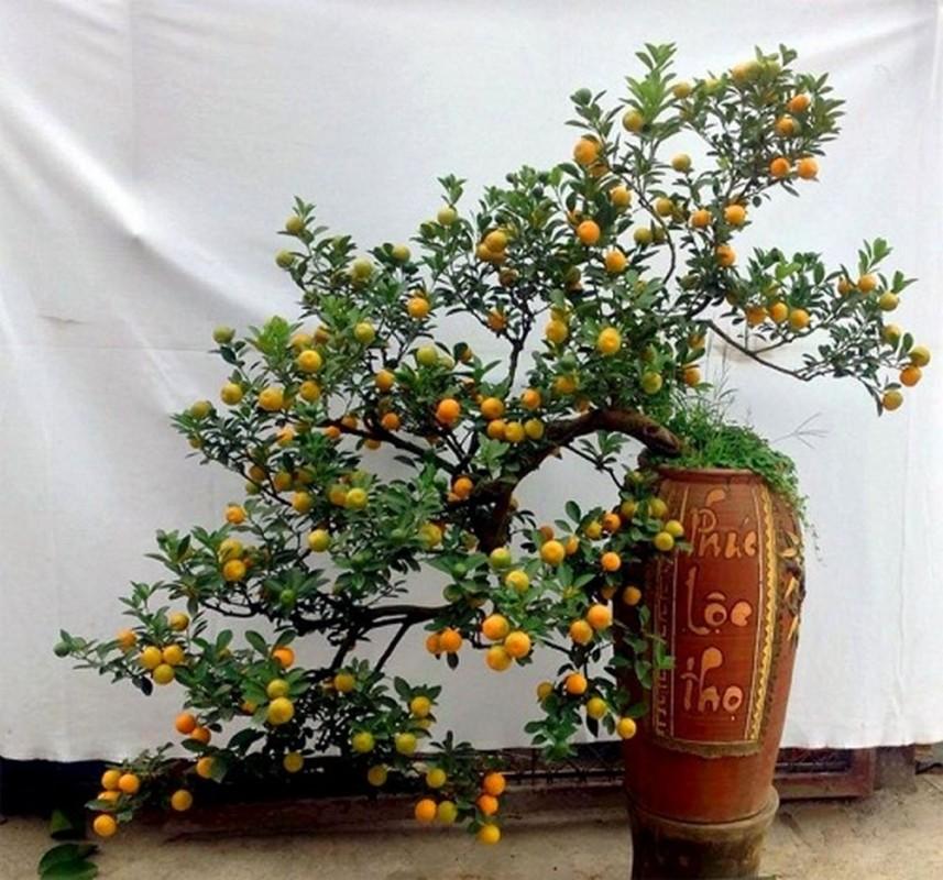 cây phong thủy ngày tết